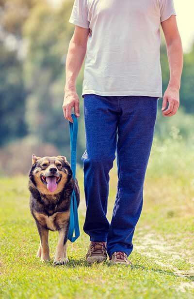 Dog-Walking=4