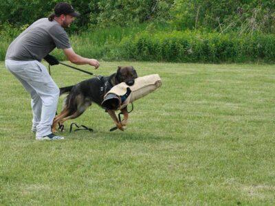 protection-training-2