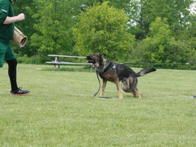 protection-training-3